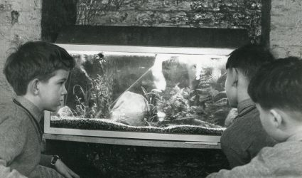 Boys in the Boarding House looking at a Fish Tank