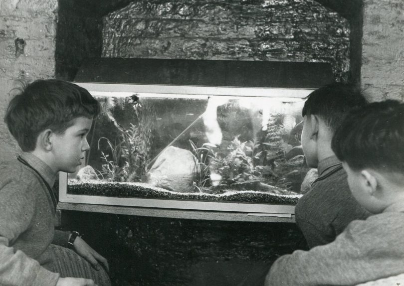 Boys in the Boarding House looking a Fish Tank