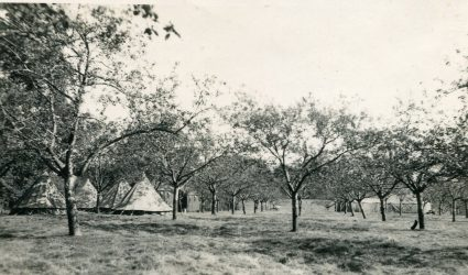 Tents in the Orchard 1938